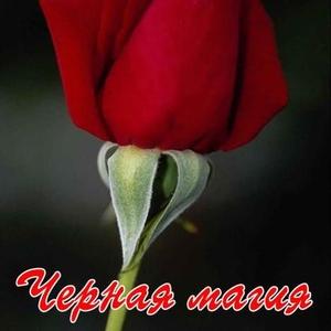 Голландские корни роз