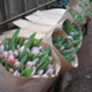 Тюльпаны оптом,  дешево