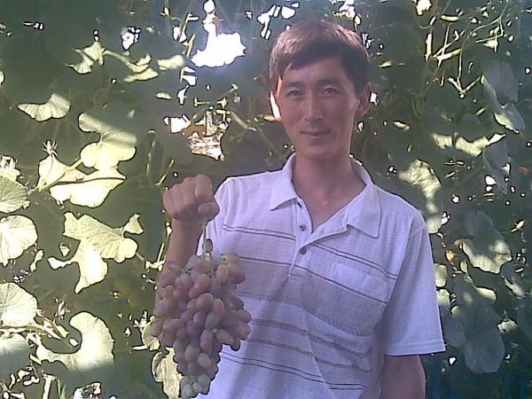 саженцы винограда более 20-сортов